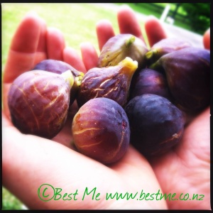 Recover fuel - Fresh figs at Appin Homestay