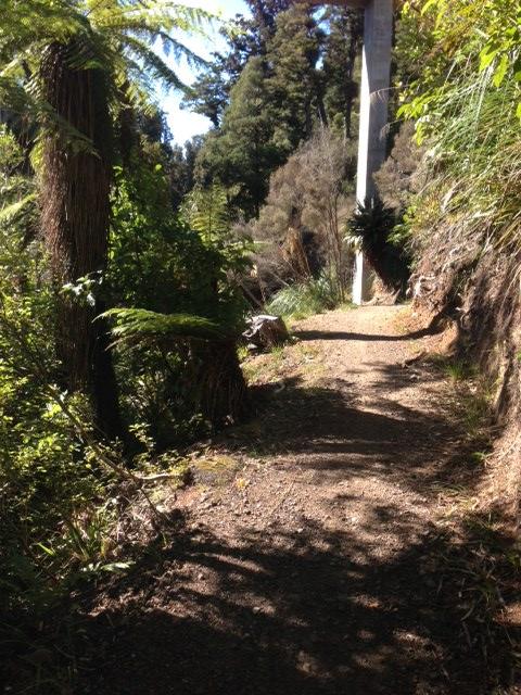 road to horopito